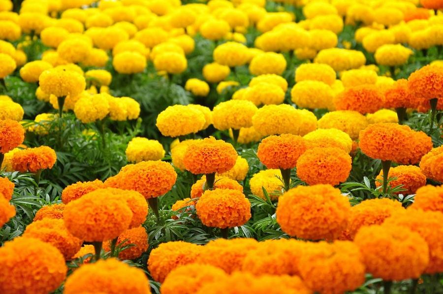 Nên sử dụng và tránh những loài hoa nào trên bàn thờ gia tiên 3